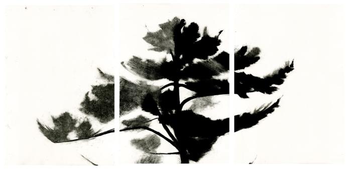 """Treetop #1, monotype, 36"""" x 72"""", 2013"""